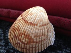 Nov.Shell1