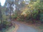 woodsneighborhood3